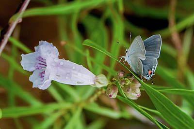 Photograph - Stalking The Flower by Kent Nancollas
