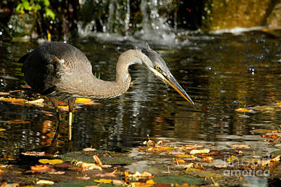 Photograph - Stalking The Pond by Heather King