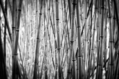 Photograph - Stalks-bw by Joye Ardyn Durham