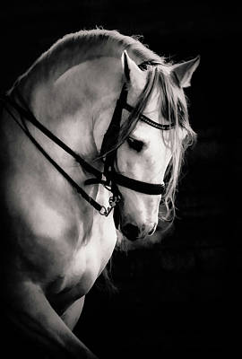 Photograph - Stallion Encore by Athena Mckinzie