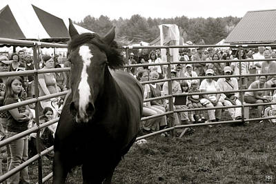 Photograph - Stallion by John Meader