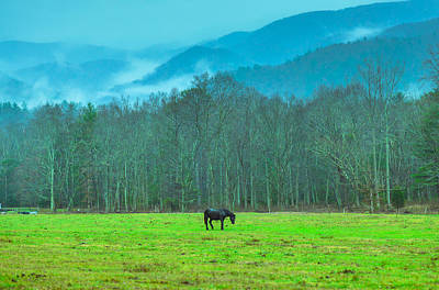 Kitchen Signs Rights Managed Images - Stallion of Smoky Mountains Royalty-Free Image by Abhay P