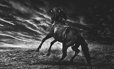 Photograph - Stallion by Pixabay