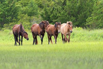Photograph - Stallion Pushing His Band Forward by Dan Friend