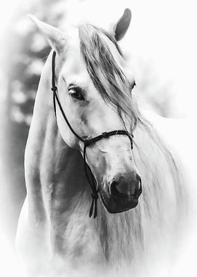 Black Unicorn Photograph - Stallion Stud Bw by Athena Mckinzie