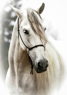 Black Unicorn Photograph - Stallion Stud II by Athena Mckinzie