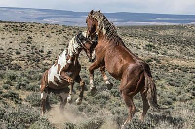 Photograph - Stallions Battle by Dawn Key