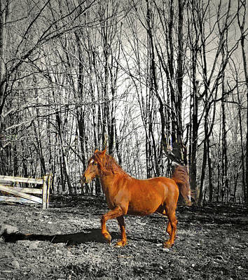 Photograph - Stallion's Fine Step by Patricia Keller