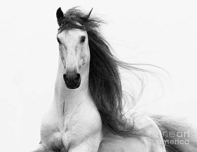 Long Mane Photograph - Stallion's Glory by Carol Walker