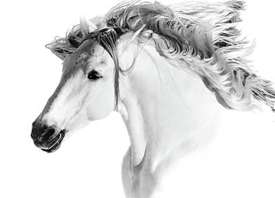 Photograph - Stallions Mane Bw by Athena Mckinzie