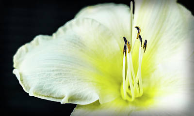 Photograph - Stamen At Attention by Will Bailey