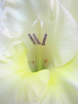 Photograph - Stamen Breeze by Rose Cowperthwaite