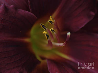 Photograph - Stamen Of Day Lily by Vivian Martin