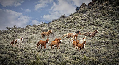 Forelock Photograph - Stampede In The Sage D3754 by Wes and Dotty Weber