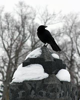 Crow Stance On Cold Stone Art Print