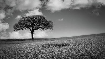 Rape Photograph - Stand Alone by Chris Dale