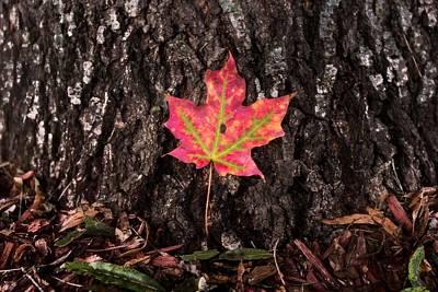Autumn Photograph - Stand Alone by Jennifer Luzio