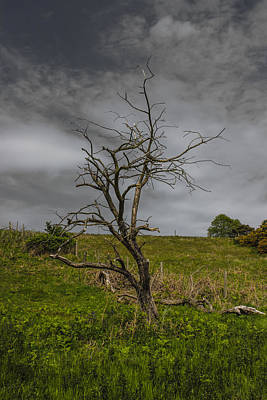 Composite Photograph - Stand Alone by Martin Newman