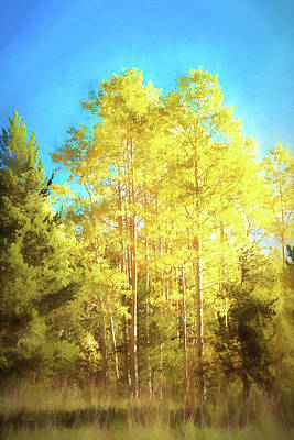 Photograph - Stand Of Aspen by Mike Braun