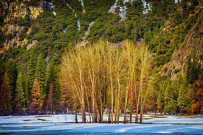 Bare Trees Photograph - Stand Of Winter Trees by Garry Gay