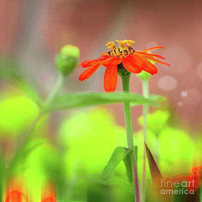 Photograph - Stand Out by Susan Warren