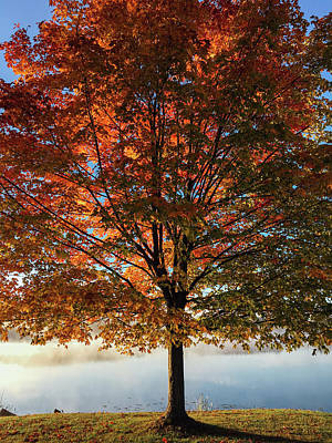 Autumn Photograph - Stand Tall by Aaron Burden