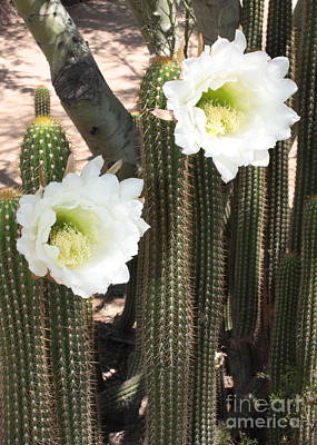 Photograph - Stand Tall Desert Flowers by Carol Groenen