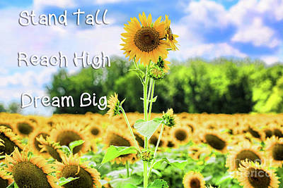 Photograph - Stand Tall - Reach High - Dream Big by Diana Raquel Sainz