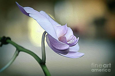 Photograph - Standing Alone In Silence by Diana Mary Sharpton
