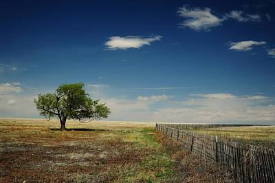 Photograph - Standing Alone by Ken Smith