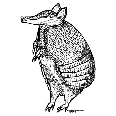 Textured Drawing - Standing Armadillo by Karl Addison