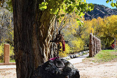 Photograph - Standing At Attention In Chimayo by Tom Cochran