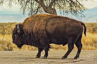 Photograph - Standing Buffalo by Steven Parker