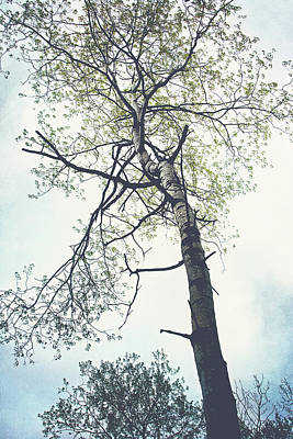 Colored Pencils - Standing Glory Tree Print by Gwen Gibson