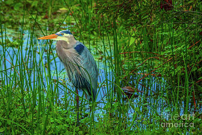 Photograph - Standing Heron #1 by Tom Claud