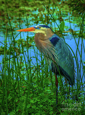 Photograph - Standing Heron #2 by Tom Claud