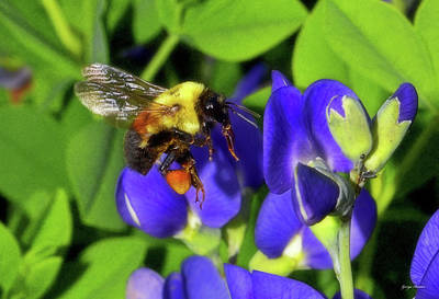 Photograph - Standing In Motion - Bumblebee 003 by George Bostian