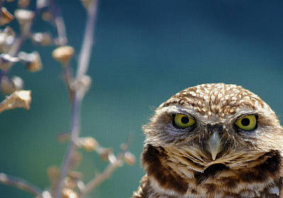 Burrowing Owl Photograph - Standing My Ground Deux by Fraida Gutovich