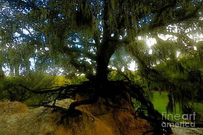 Tree Roots Digital Art - Standing Oak by David Lee Thompson