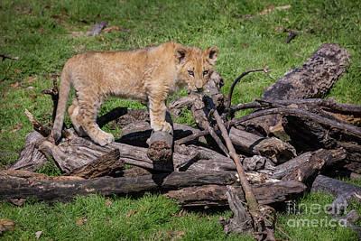 Photograph - Standing On A Woodpile by Karen Jorstad