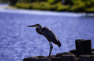 Photograph - Standing On The Dock Of The Bay by Richard Lee