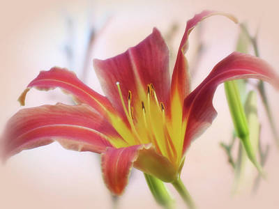 Photograph - Standing Out - Daylily by MTBobbins Photography