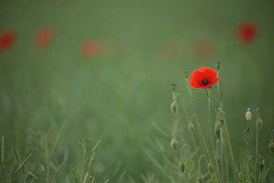 Photograph - Standing Out In A Sea Of Green by Peter Walkden