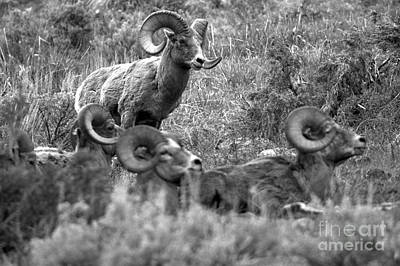 Photograph - Standing Over The Yellowstone Warriors Black And White by Adam Jewell