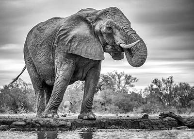 Monochrome Photograph - Standing Proud by Jaco Marx