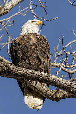 Photograph - Standing Proud by Scott Bean