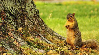 Photograph - Standing Squirrel by Briana La Trise
