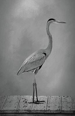 Photograph - Standing Tall 3  by HH Photography of Florida