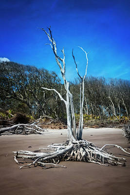 Photograph - Standing Tall At Low Tide by Debra and Dave Vanderlaan