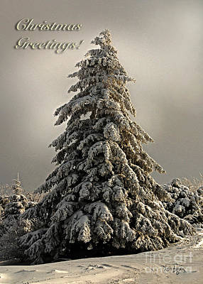 Standing Tall Christmas Card Art Print by Lois Bryan